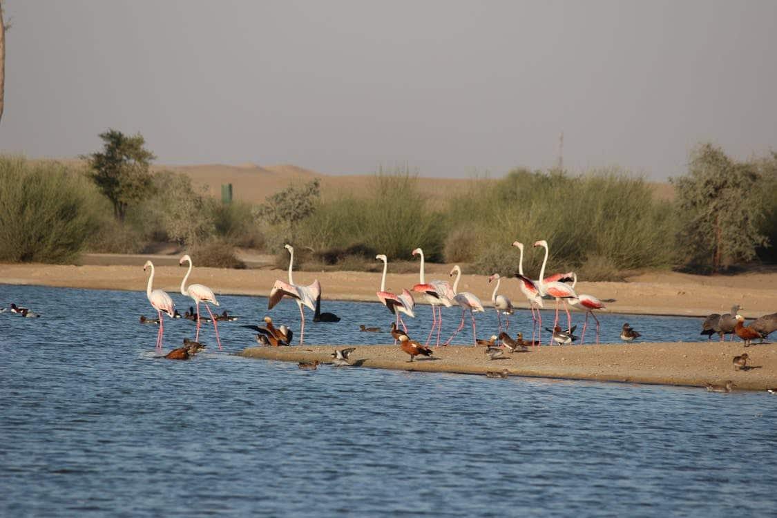 Kolayat Lake Bikaner Rajasthan 2020