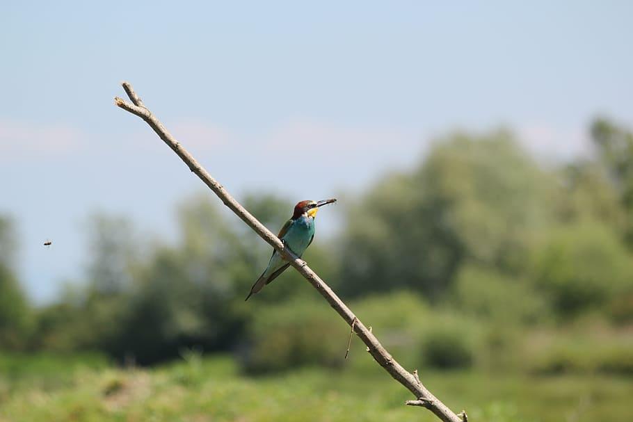 Sita-mata-wildlife-senctuary