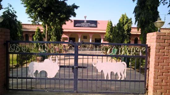 kalibanga-museum