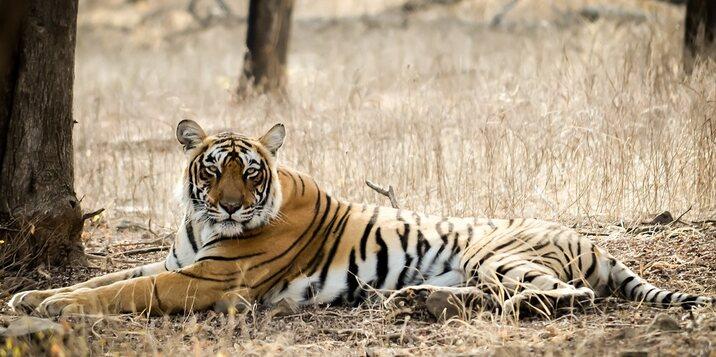 Mukundra Hills tiger reserve kota rajasthan