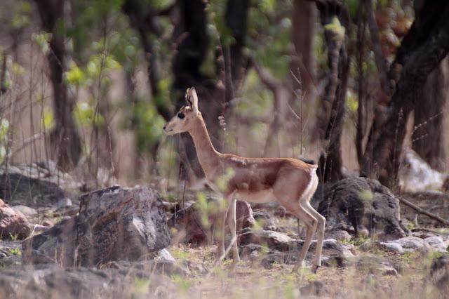 Gajner Wildlife Sanctuary Bikaner Rajasthan