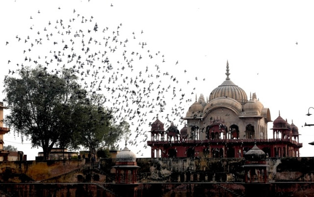 Moosi Maharani Ki Chhatri, Alwar 2020