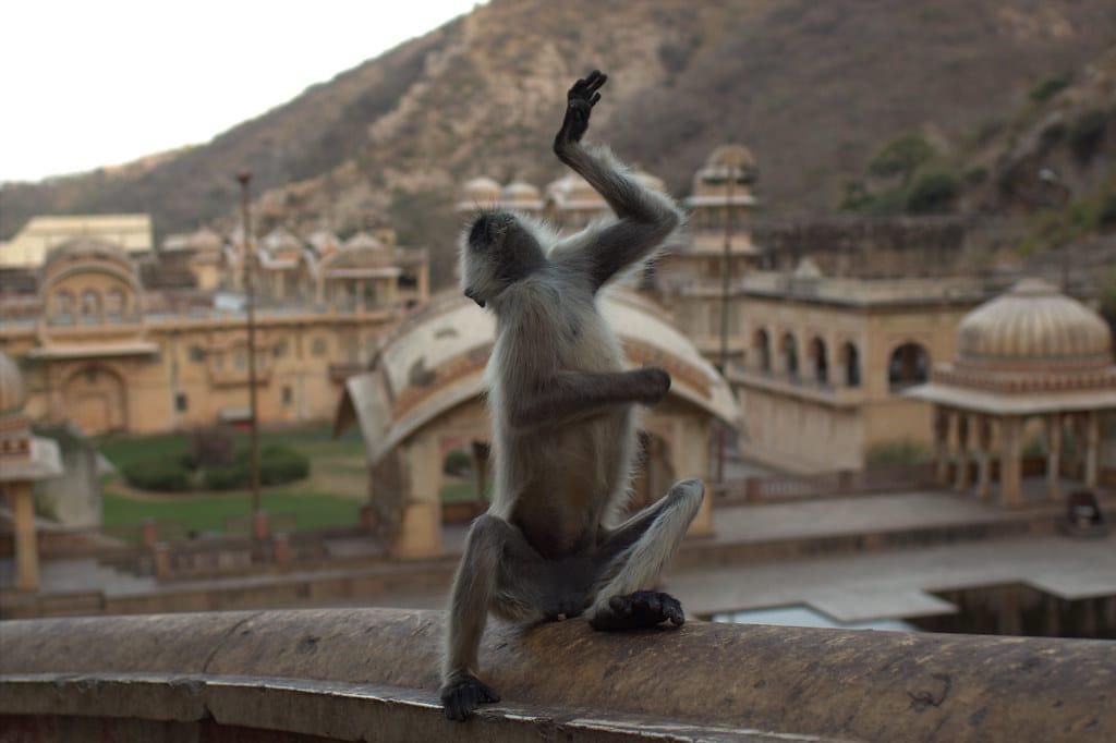 Galtaji Temple Jaipur01